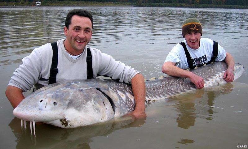 рыбаки во вторник выловили рыбы на 30 процентов больше чем