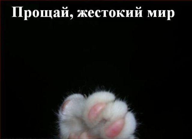 http://korzik.net/uploads/posts/2008-04/1207472219_q11.jpg