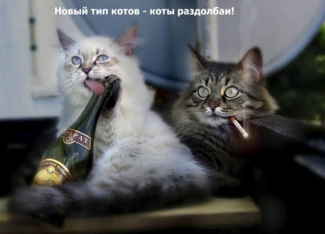 http://korzik.net/uploads/posts/2008-04/1207472260_q16.jpg