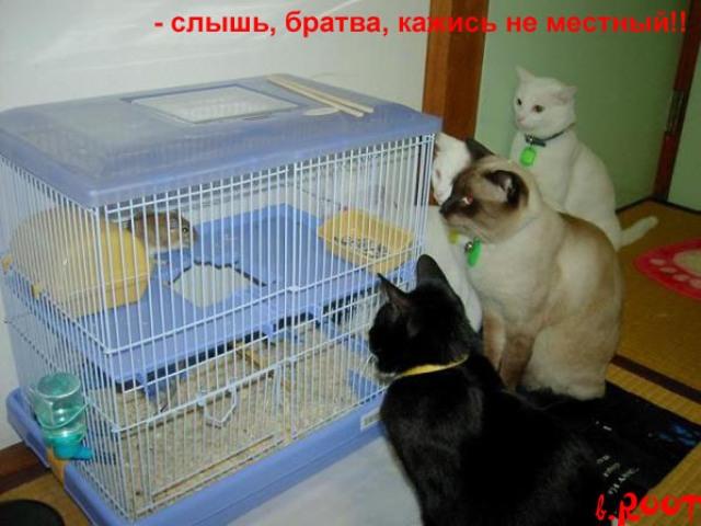 http://korzik.net/uploads/posts/2008-04/1207472277_q14.jpg