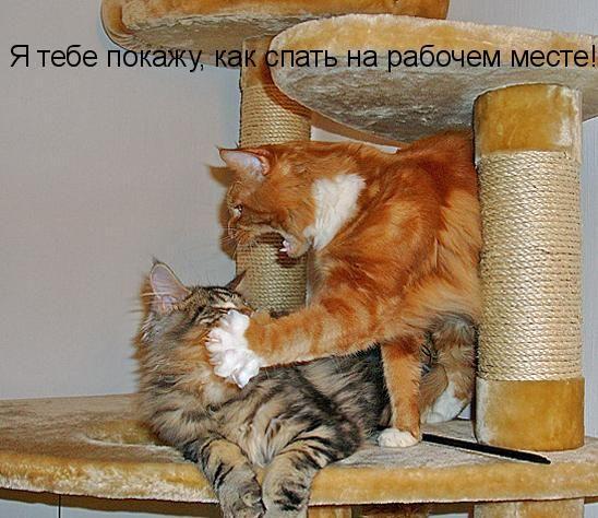Фото приколы дня :)