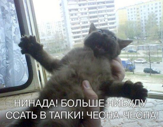 Позитифф на понедельник))) Смотреть всем!!!