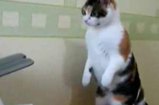 Кот и принтер :)