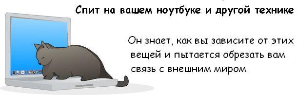 Узнай, хочет ли твой кот убить тебя? :)