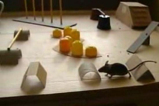Умный мышонок