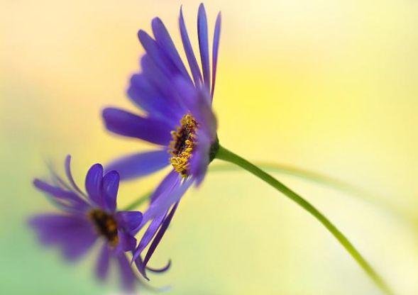 Цветы. Очень красивые фотки