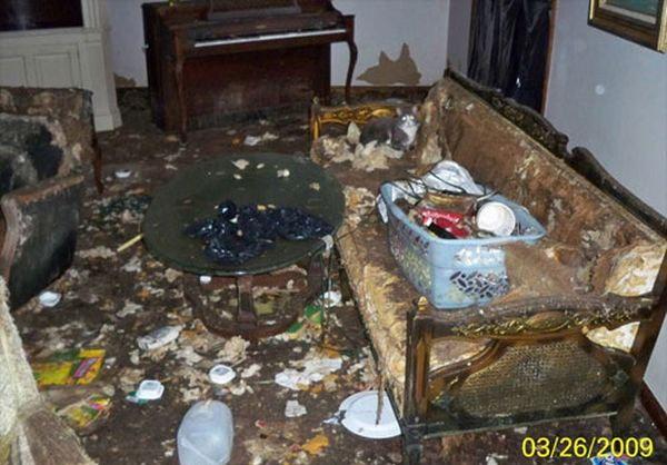 Кошаки атаковали квартиру