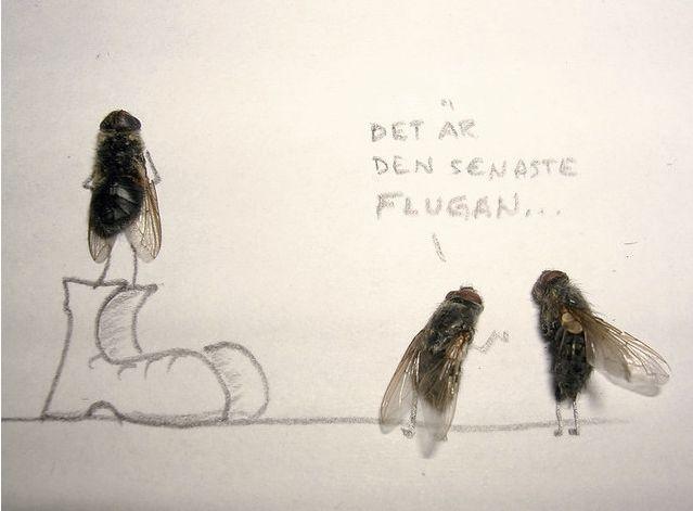 Смешные картинки про мух с надписями