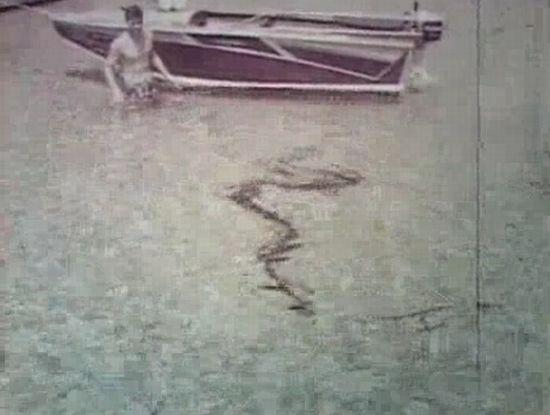 Борьба с 10-метровой анакондой под водой