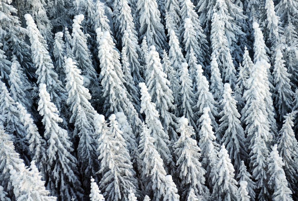 Всех с первым днем зимы :)