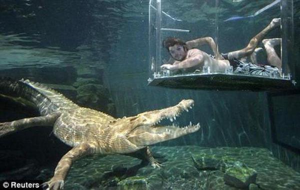 Встреча с крокодилом