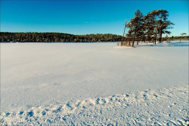 Зимний лес в Швеции