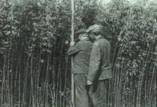 Конопля в советской хронике