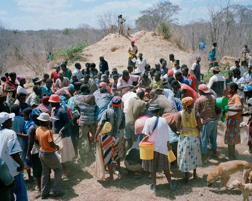 Про мертвого слона в Зимбабве