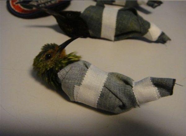 Контрабанда колибри