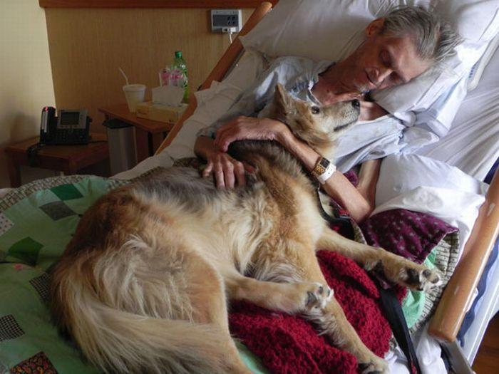 умерли в один день кошка и собака молодые такого вида