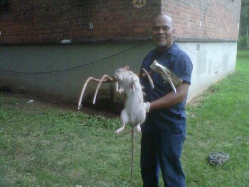 Em Nova York foi atacada por um rato gigante
