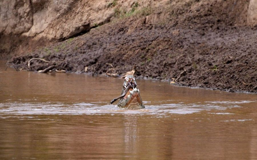 Миграция через реку Мара