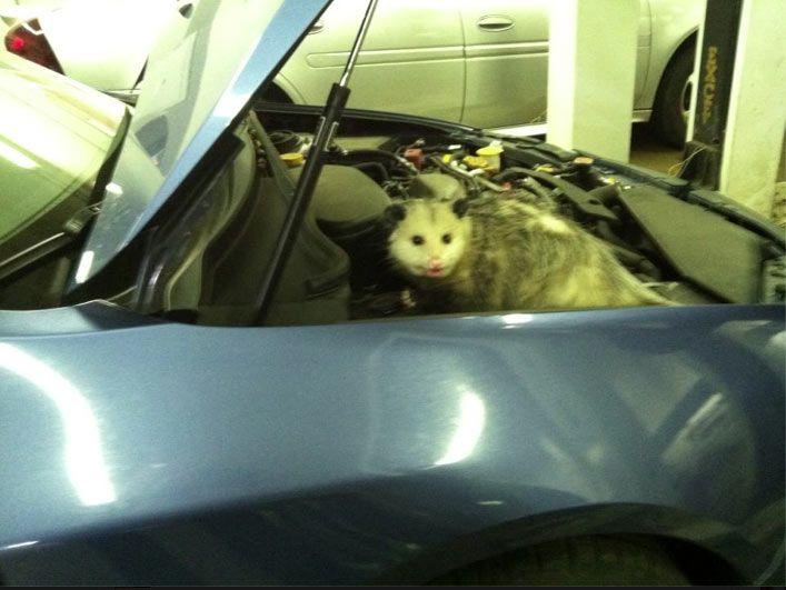 Клиент пожаловался на писк из правой части двигателя