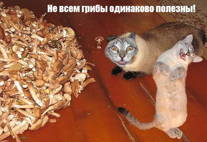 http://korzik.net/uploads/posts/2013-10/1382364433_podborka_98.jpg