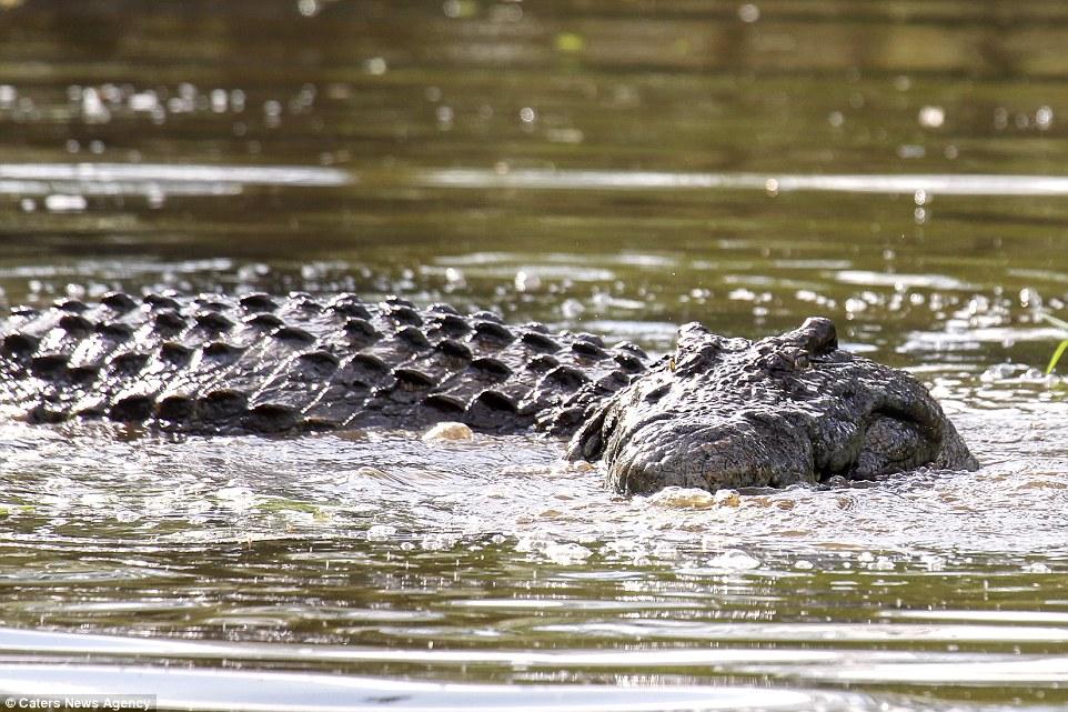 Побег из пасти крокодила
