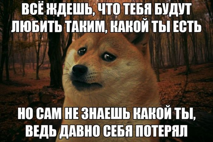 1421184566_podborka_18.jpg