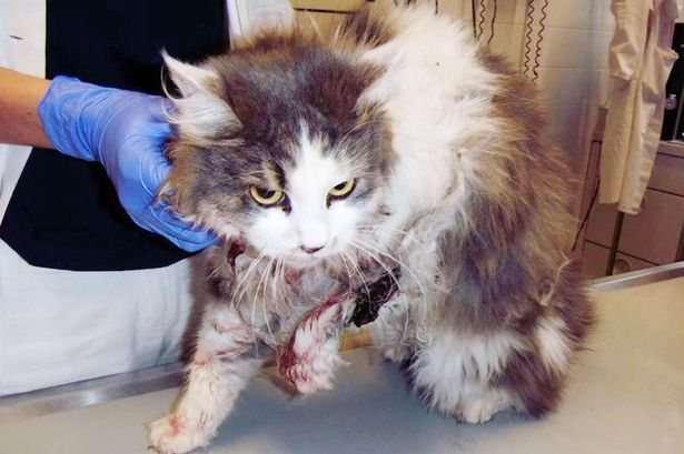 каком кот забрался под защитой картах Таро Расклад