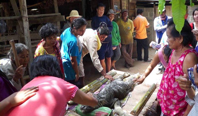 В Таиланде родилась неведомая зверушка с телом буйвола и головой крокодила