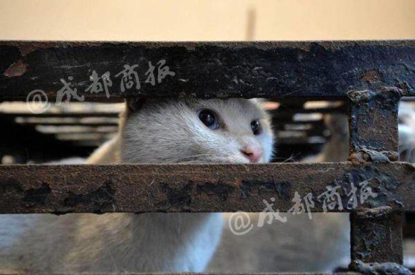 Защитник животных убивал бродячих котов и продавал их мясо под видом кроличьего