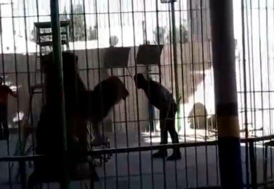 В Египетском цирке лев напал на дрессировщика