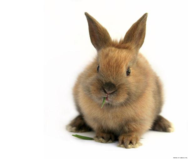Головоломка про кроликов