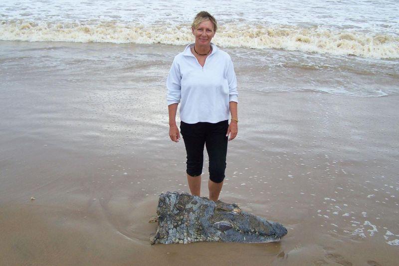 Огромная акула отгрызла голову трехметровому крокодилу