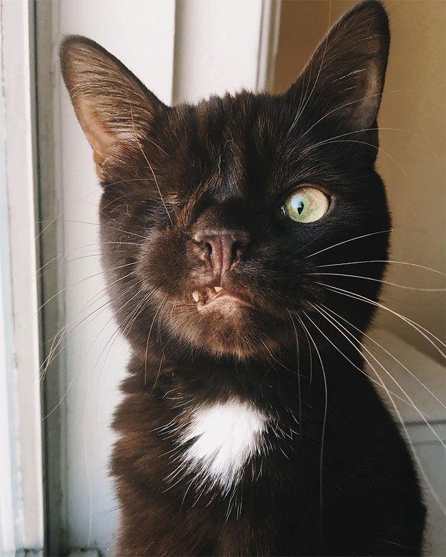 Одноглазый кот с устрашающим видом и добрым сердцем