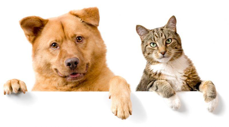 А вам больше нравятся коты или собаки?