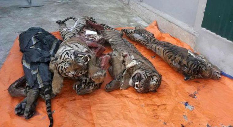 Пять тигров в морозильной камере