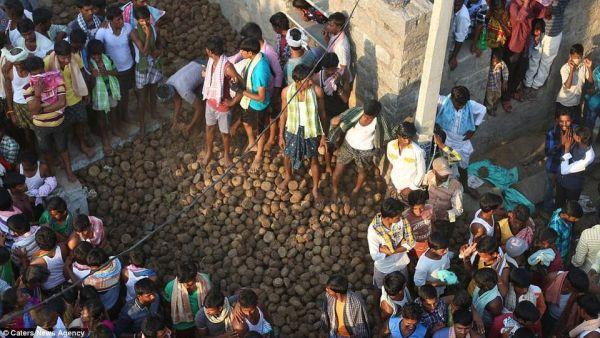 В Индии прошла праздничная битва коровьим навозом