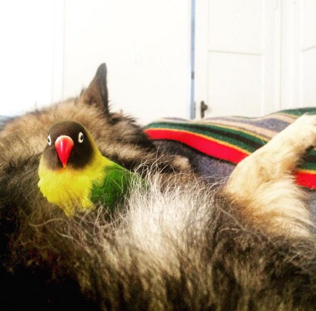Собака и попугай – лучшие друзья!