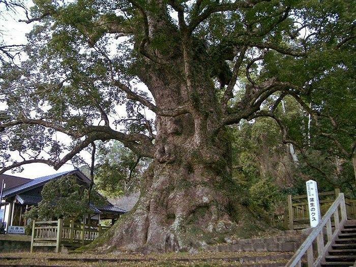 Гигантский лев, вырезанный из целого дерева