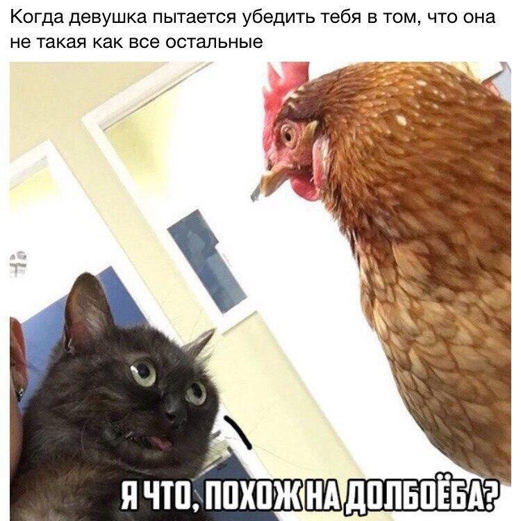 ЯНЕТАКАЯ