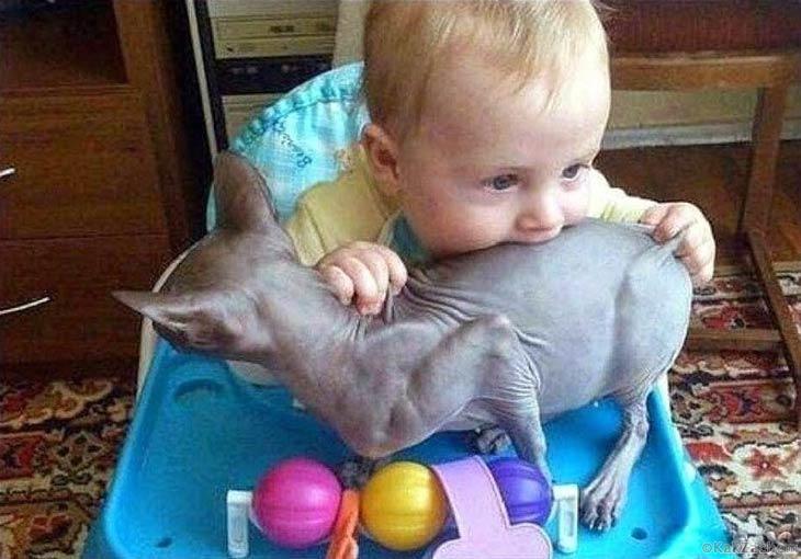 Животные в рабстве у детей