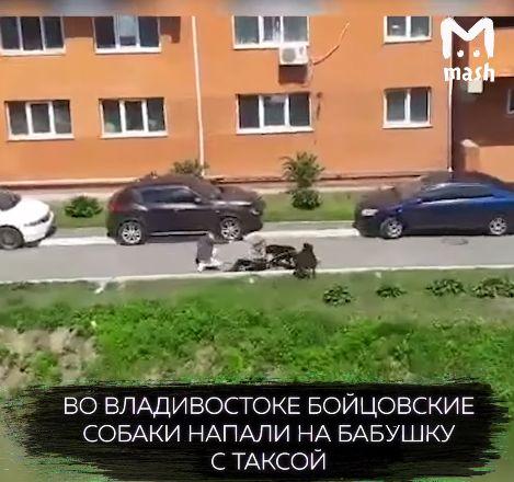 Бойцовские собаки напали на бабашку с таксой