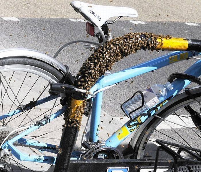 Велосипед точно никто не украдет