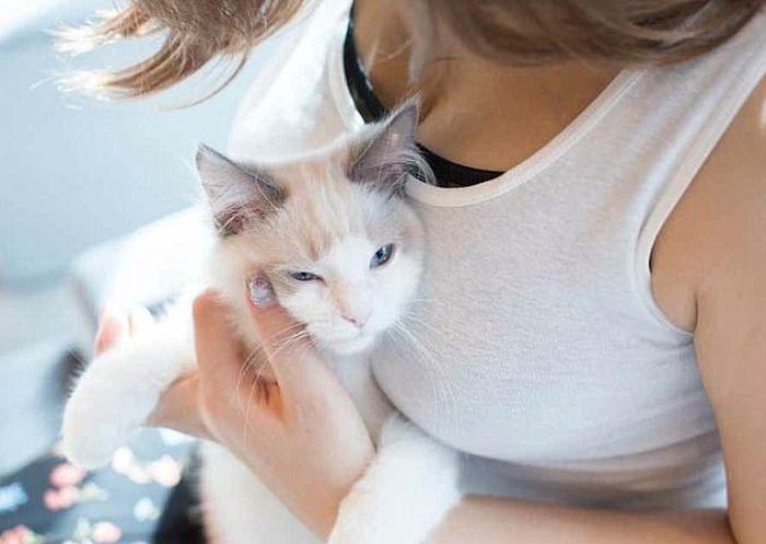 Кошки тоже без ума от женской груди