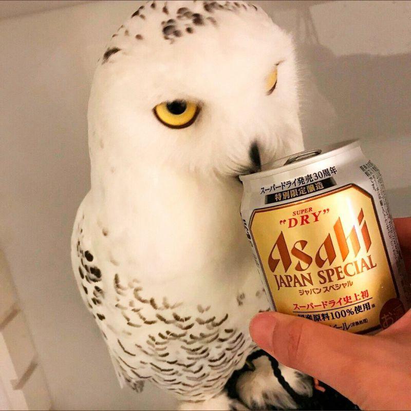 Птица-алкоголик – горе в гнезде