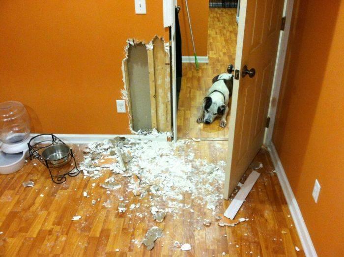 Собака осталась дома одна