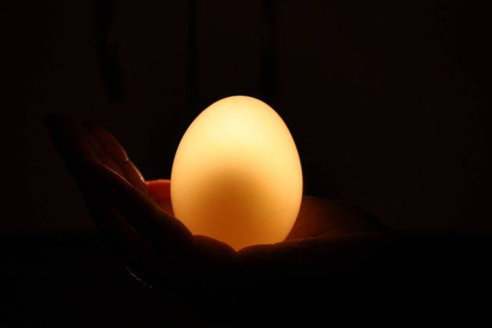 Куриное яйцо в уксусной кислоте
