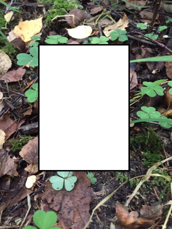А такой белый гриб вы видели?