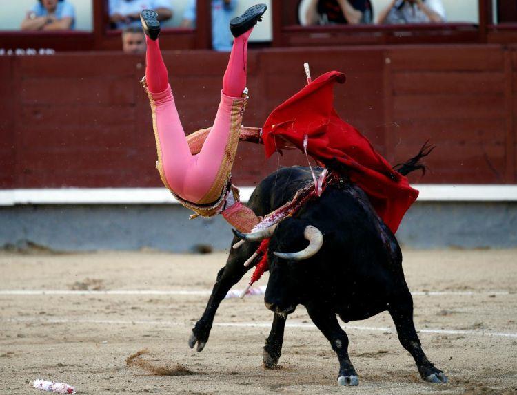 Не по правилам: когда побеждает бык