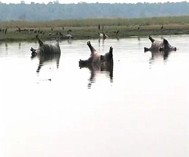 Более 100 бегемотов убила сибирская язва в Намибии