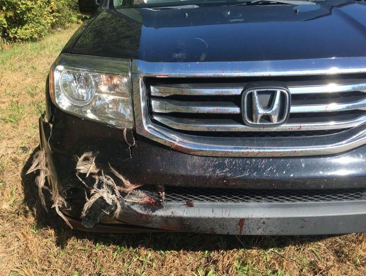 Сбежавший эму стал причиной дорожной аварии в Джорджии